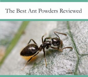 Best Ant Powders Tested and Reviewed