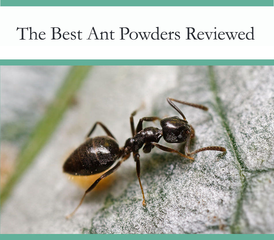 Ant Powders reviewed