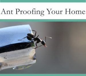 Ant Proof your home