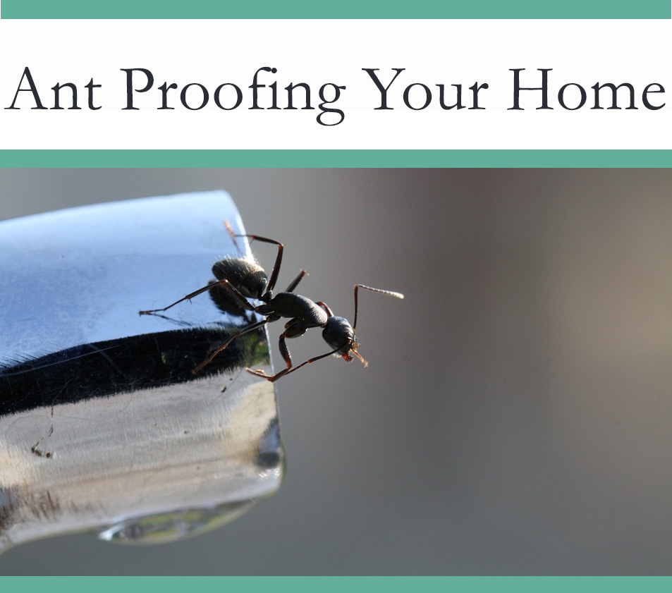 Ant Proofing your Home