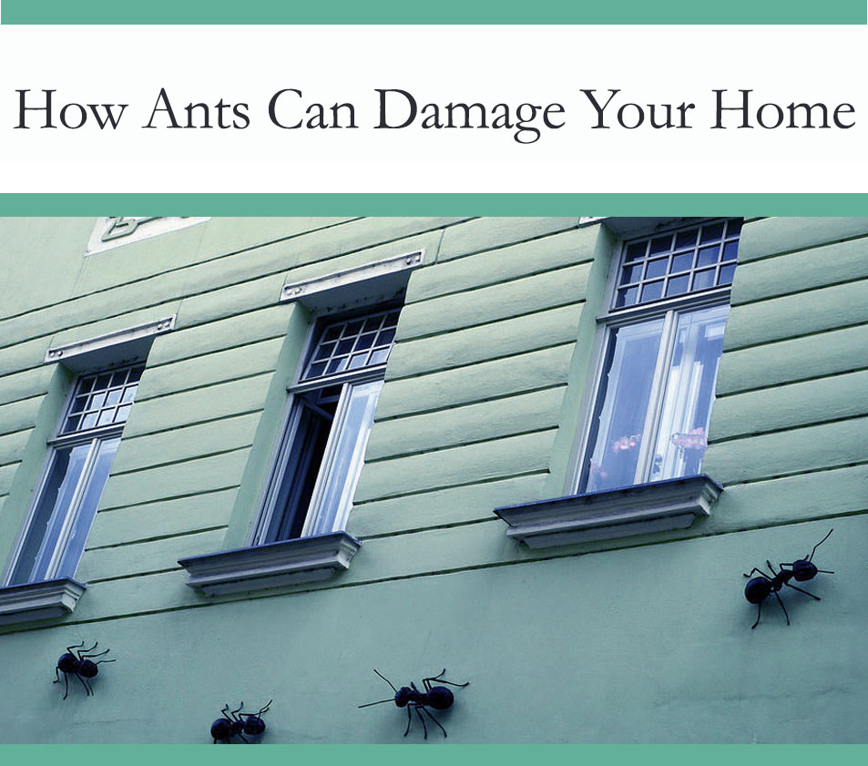 How ants & termites damage cause structural damage to your home