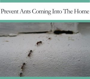 howto prevent ants from entering your home