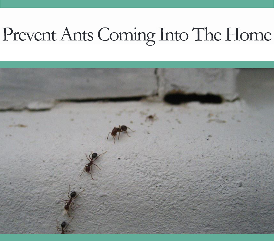 howto prevent ants from entering your house