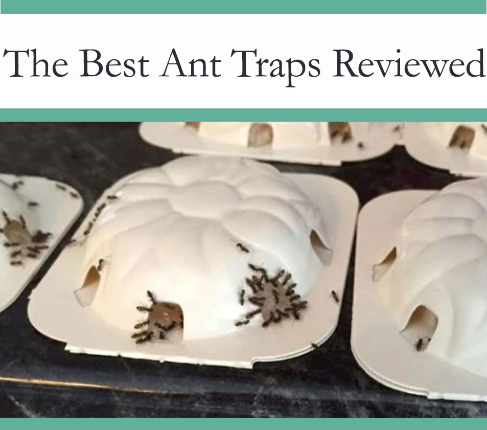 Best ant traps & bait stations
