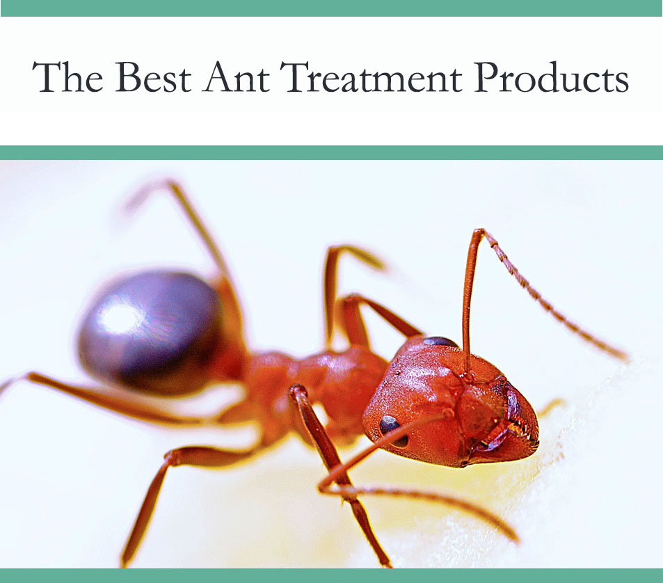 Best ant treatment product - get rid of ants efficiently