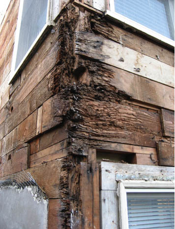 Structural damage caused by insects