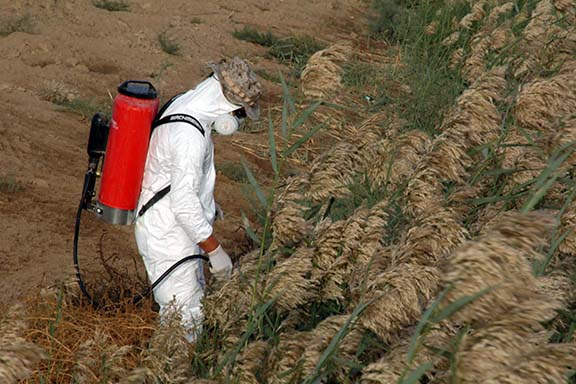 Chemical Pesticides being applied
