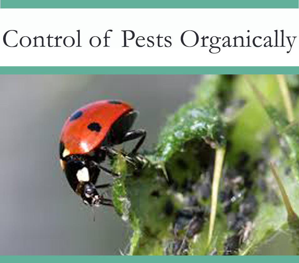 Eco Friendly Pest control