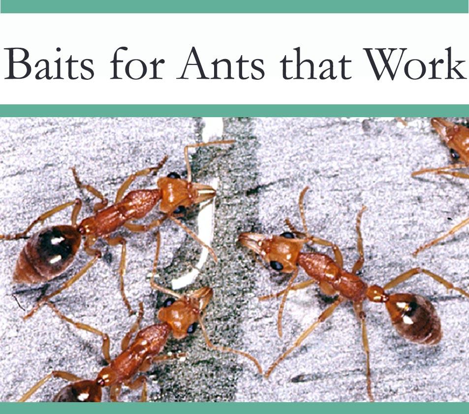 Bait for Ants