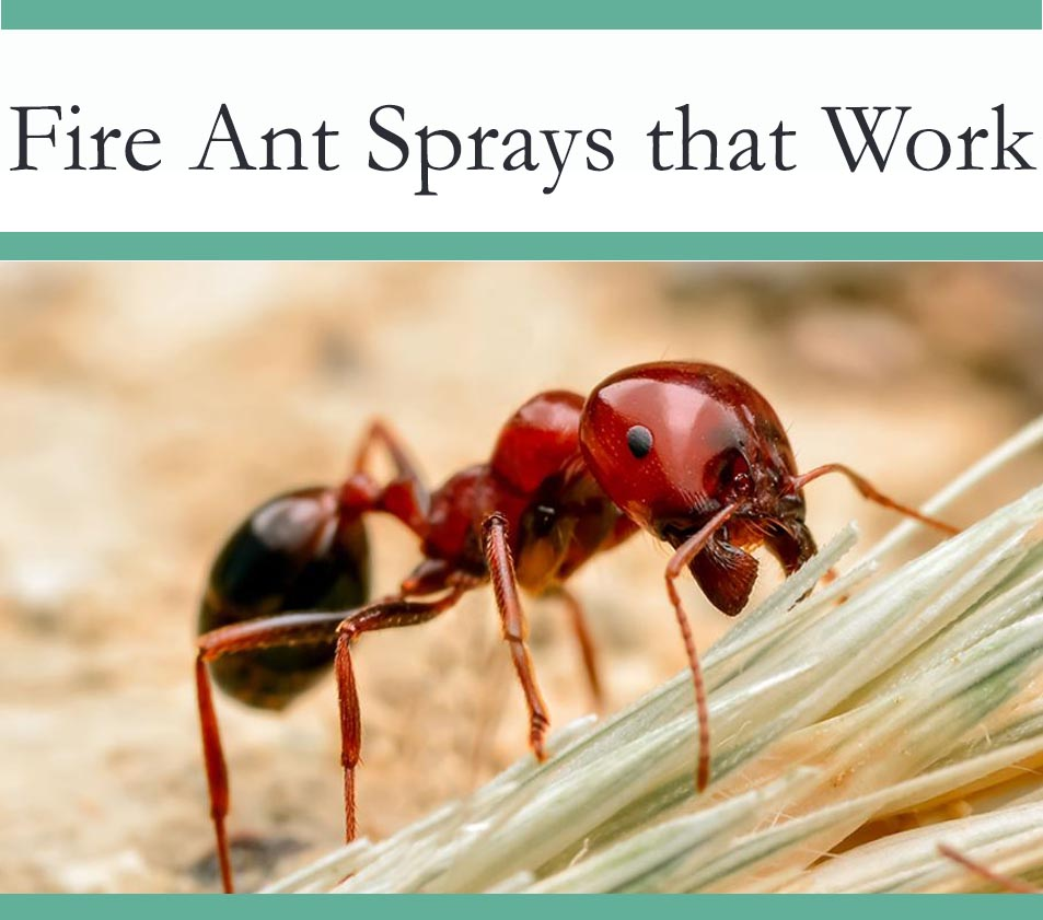 Best Spray to get rid of Fire Ants