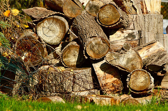 Large wood pile attracts ants