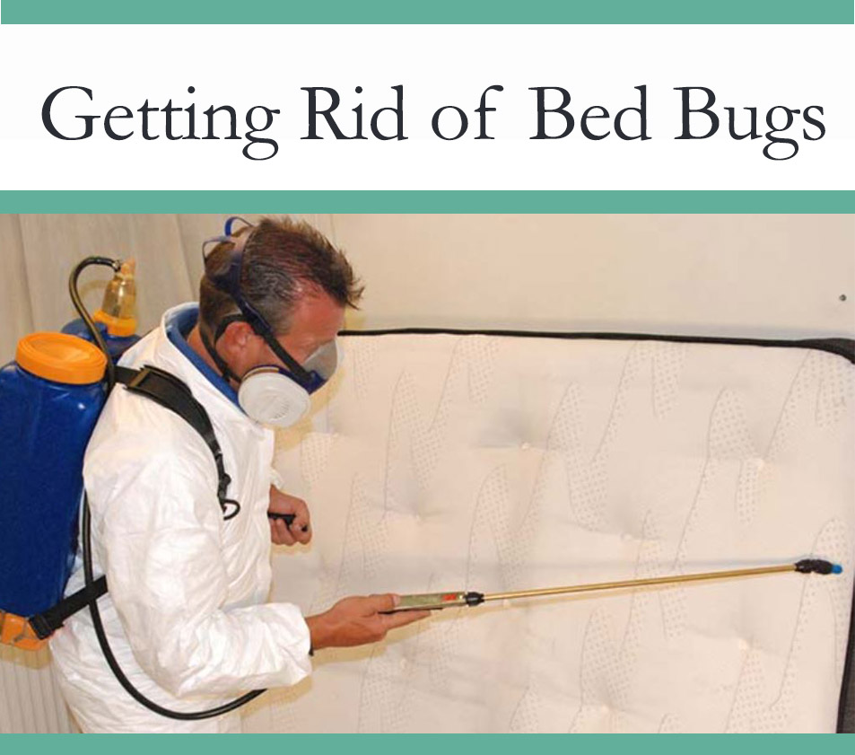 Controlling Bedbugs