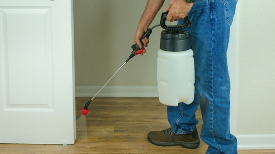 Spraying insecticides or pesticides against indoor bedbugs