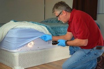 Bed bug infestation extermination service man in gloves and safety glasses inspecting infected mattress sheets and blanket bedding with a powerful flashlight preparing to exterminate the bugs.