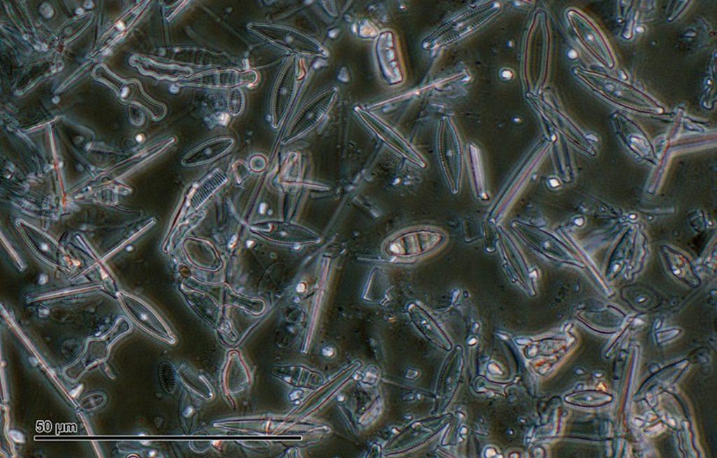 Diatomaceous Earth closeup