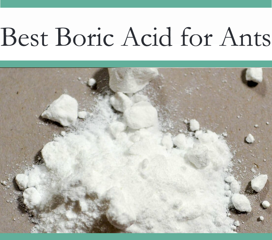 Boric Aciid for Ants
